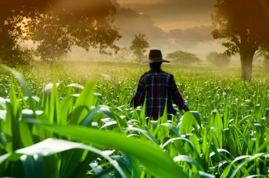 agricultor-plantacao-e1409063582149