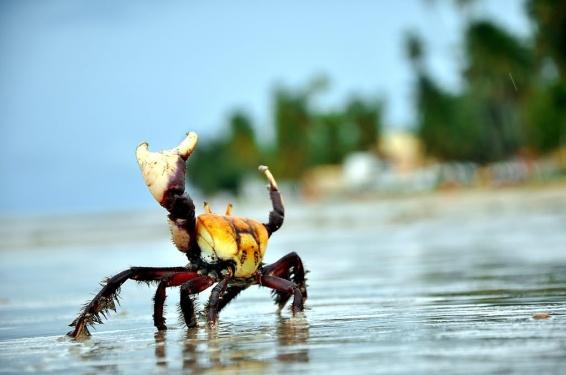 parque-ecologico-do-caranguejo-u-01