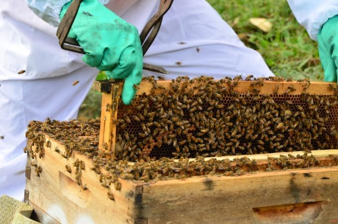 apicultura_20160803_1159335867.jpg