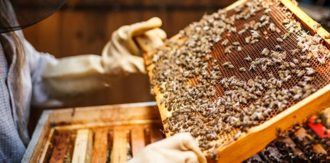 106_GAGRO_apicultura-muito-alem-do-mel_REVISADO_840x415