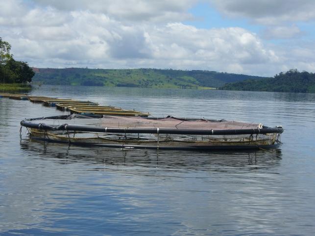 O sistema de tanques-rede funciona em estruturas flutuantes_foto Roselany Correa.JPG